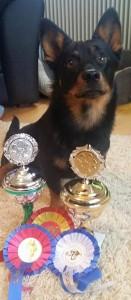 D.Sisu-Sinkkupoika Virossa 7.11.2015 ja 8.1.2015 2x ROP sekä 2 x jun-sert